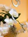 oeufiyoga_ashtanga yoga solothurn_orchidee OM.jpg